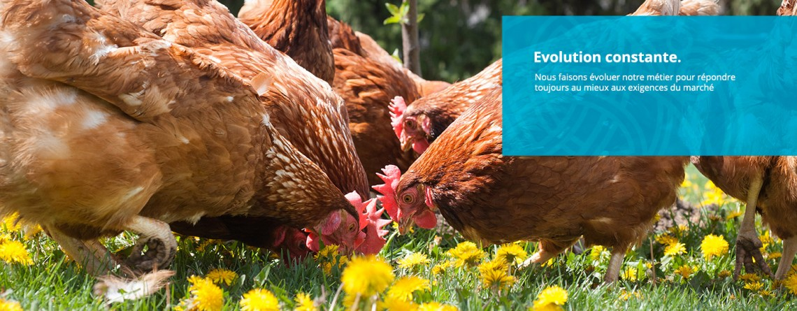 Import/export de viande de volailles